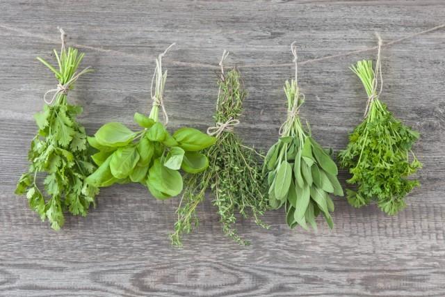 erbe messe ad essiccare