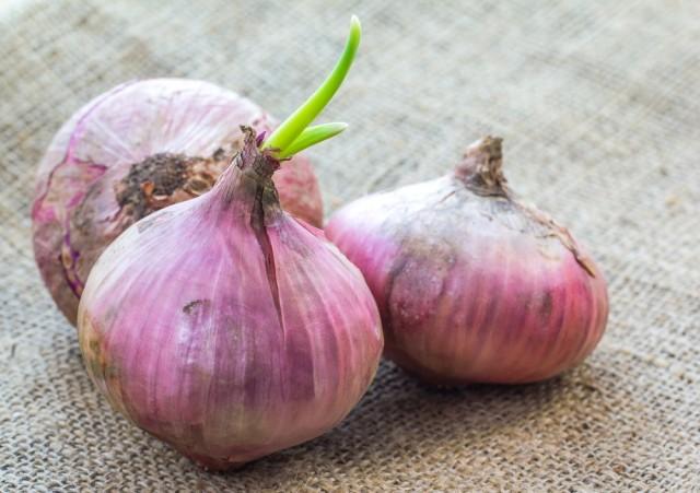 Cipolle germogliate
