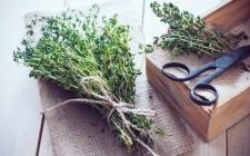 Essiccare e conservare le erbe aromatiche