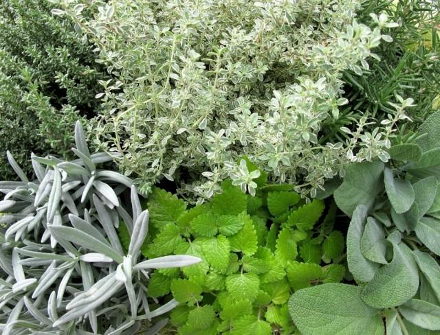 Essiccare e conservare le erbe aromatiche agrodolce - Erbe aromatiche in casa ...