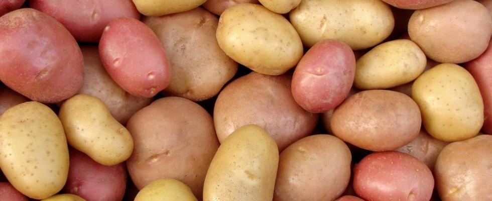 Patate: le tipologie e gli usi in cucina