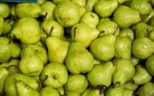 Ottobre: verdure e ortaggi di stagione
