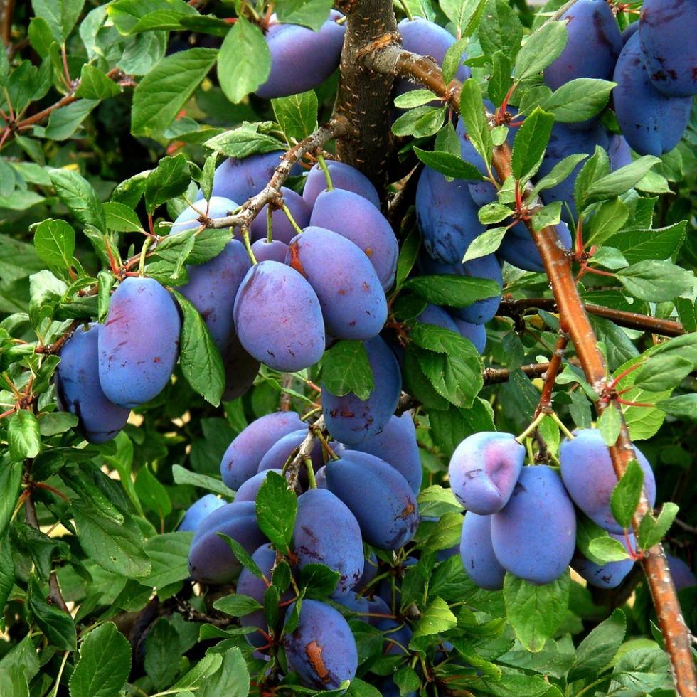 Frutta e verdura di stagione: settembre - Foto 6