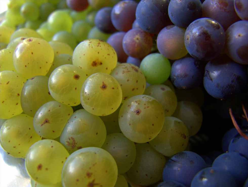 Frutta e verdura di stagione: settembre - Foto 13