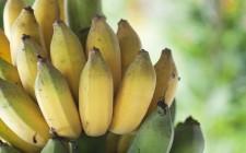 Sapete come cresce la frutta?