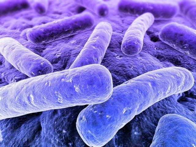 flora batterica