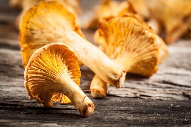 Funghi chanterelle