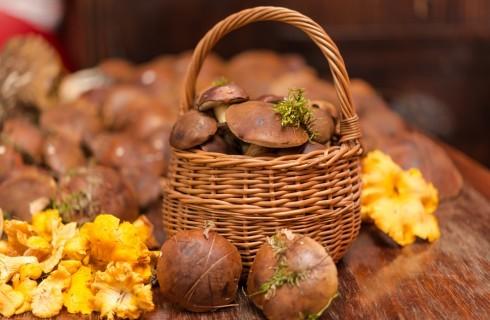Profumi del sottobosco: i funghi