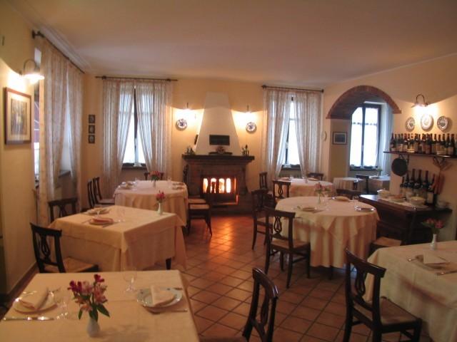 coccinella-sala