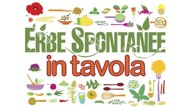 Erbe spontanee in tavola: una guida per scegliere le migliori erbe da portare in tavola