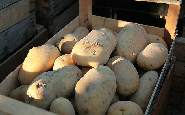 La pasta patate e provola con la ricetta napoletana