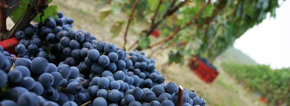 Terre Da Vino: l'espressione vinicola di un territorio