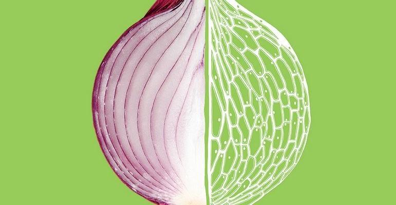 FOOD: la scienza del cibo in mostra a Milano