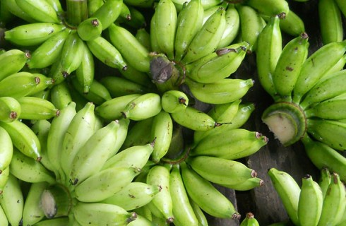 La superbanana OGM per salvare l'Africa