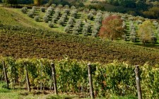 L'altra Toscana: i vini di Colline di Sopra