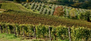 L'altra Toscana: da Montescudaio i vini di Colline di Sopra