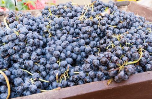 Enologica 2014: le bandiere della vitiviniculura emiliano-romagnola