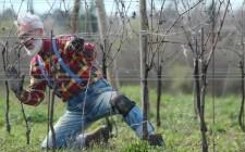 I Signori del Vino: l'enologia in tv