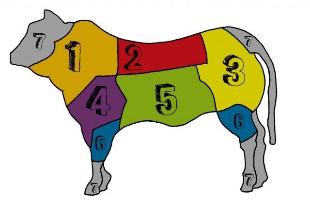 tagli di bovino colori copia