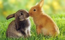 Il coniglio: animale d'affezione o cibo?