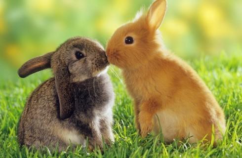 La Brambilla e il coniglio: cibo o animale d'affezione?