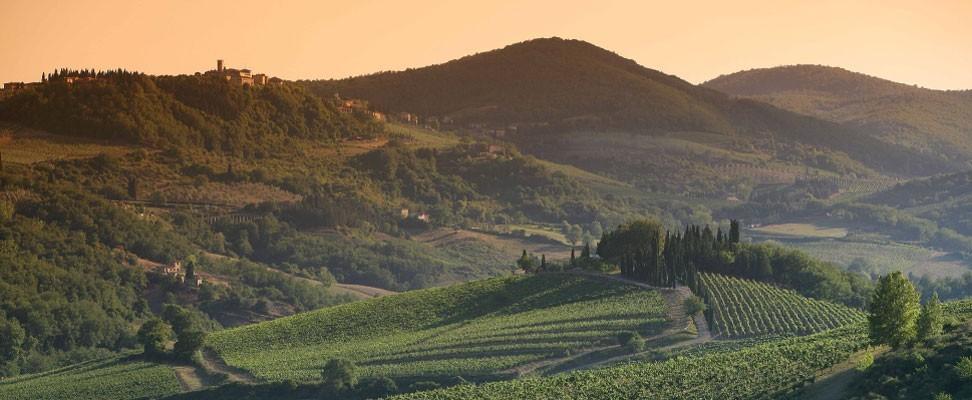 Montevertine: storia liquida di un vino del Chianti