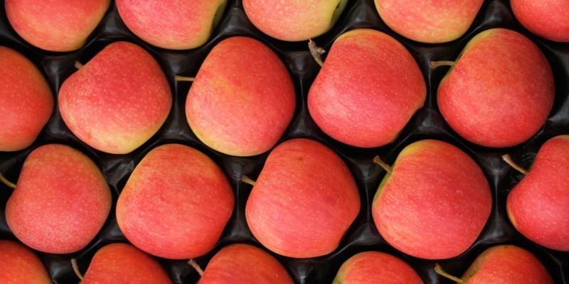 Dagli USA la mela OGM che non annerisce