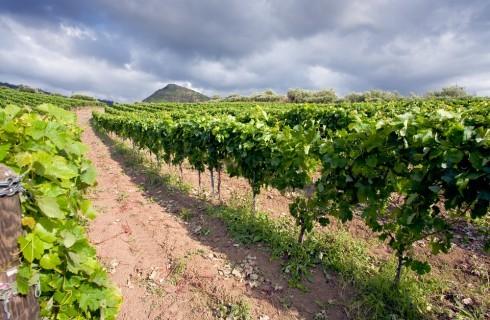 Vini dell'Etna: 5 aziende da scoprire