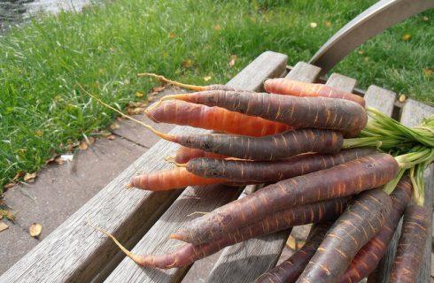 Il risotto con carote nere per stupire gli ospiti