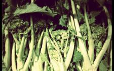 Cime di rapa in padella con la salsiccia: la ricetta veloce e saporita