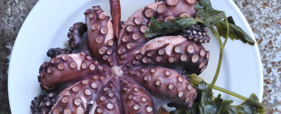 Polpo bollito: ricetta mediterranea