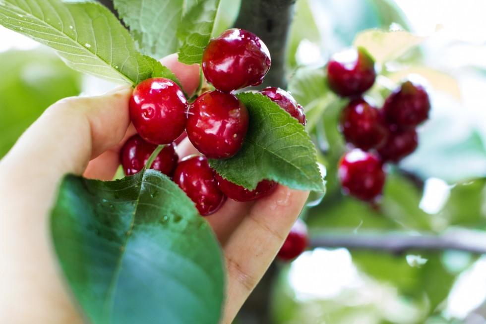 Primavera: ortaggi e frutta di stagione - Foto 12
