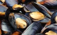 Epatite A: bloccata la raccolta delle cozze in Campania