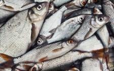 Breve guida dei pesci di acqua dolce