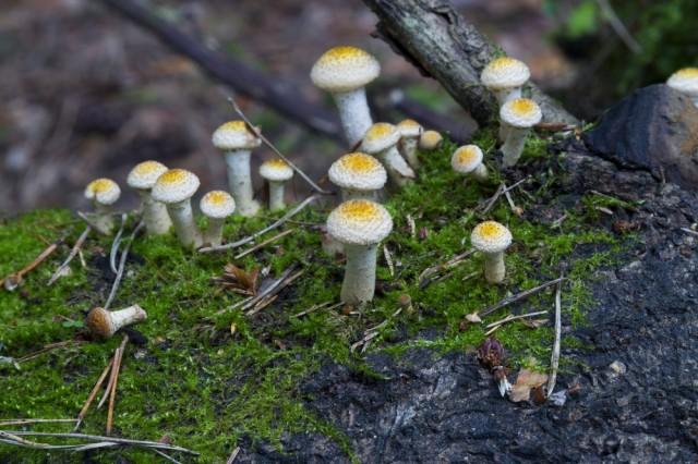 funghi nel bosco