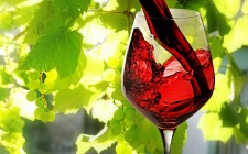ViniVeri a Cerea: fiera dei vini naturali