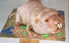 Ecco le torte più brutte del mondo