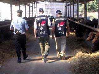 4 tonnellate di carne sequestrate a Palermo