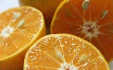 Le arance al maraschino per il dessert di fine pasto