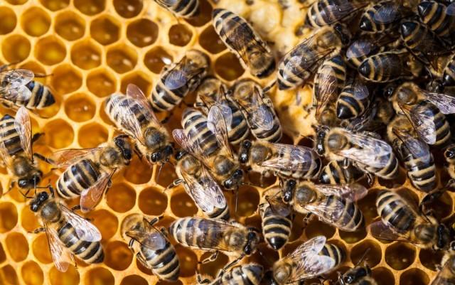 api e favo