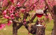 10 vini rossi da provare in primavera