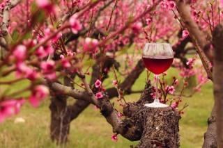 10 vini rossi per 5 vitigni da provare in primavera