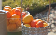 Il semifreddo agli agrumi con la ricetta semplice