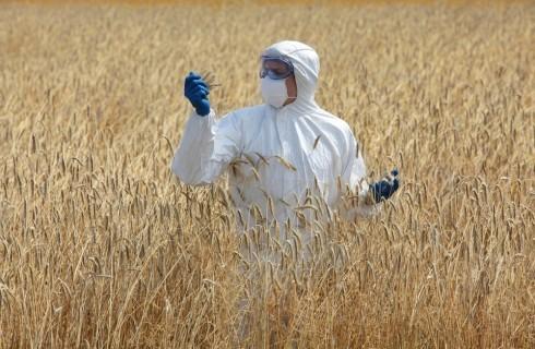 Papa Francesco: lettera affinché si esprima contro gli OGM