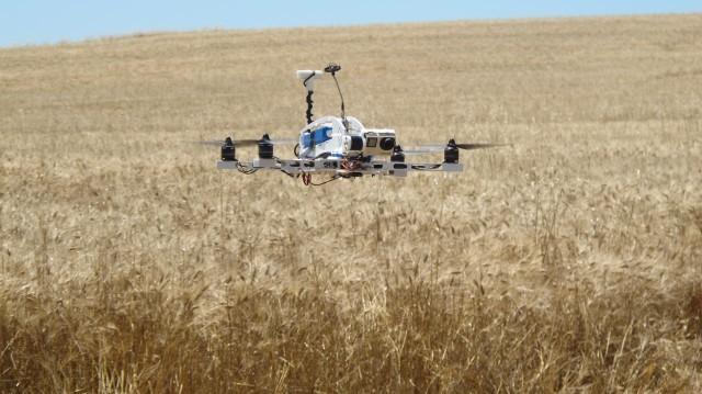 Il drone vola su un campo di grano