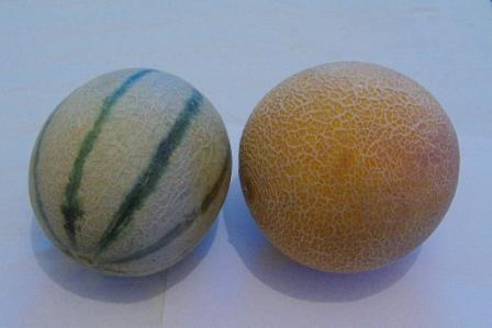 Il melone giallo e bianco: le differenze e come gustarli al meglio