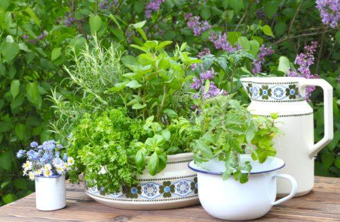 Le piante aromatiche da usare in estate