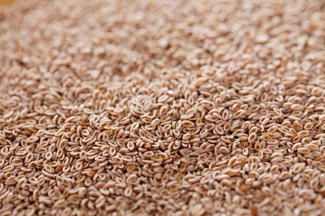 semi di levistico