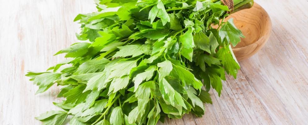 Conoscere le erbe aromatiche: il levistico