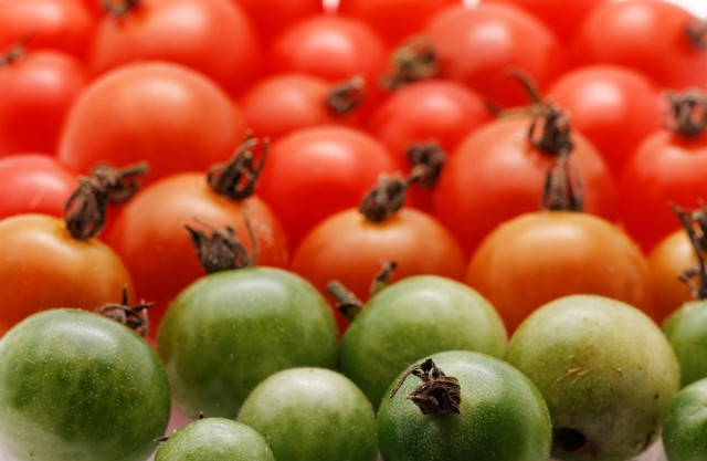 pomodori non maturi